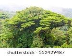 Rain Forest Tree In Monteverde...