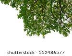 branch green leaves on white... | Shutterstock . vector #552486577