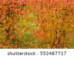 grunge colorful leaves on the... | Shutterstock . vector #552487717