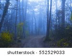 magical foggy seasonal forest... | Shutterstock . vector #552529033