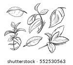 mint  medicine herb peppermint...   Shutterstock .eps vector #552530563