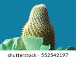 close up on a green cactus with ... | Shutterstock . vector #552542197