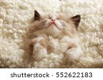Stock photo cute little kitten sleeping on white plaid closeup 552622183