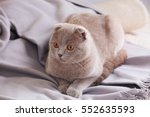 cute funny cat lying on plaid... | Shutterstock . vector #552635593