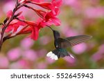 flying bird in nature habitat.... | Shutterstock . vector #552645943