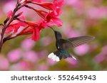 fly bird in nature habitat.... | Shutterstock . vector #552645943