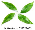 citrus leaves with drops... | Shutterstock . vector #552727483