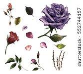 wildflower rose flower in a... | Shutterstock . vector #552744157