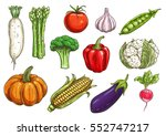 vegetable sketch with isolated... | Shutterstock .eps vector #552747217