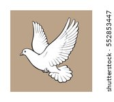 Free Flying White Dove  Sketch...