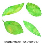 watercolor collection of leaves | Shutterstock . vector #552905947