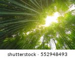 Bamboo Forest With Sun Flare A...