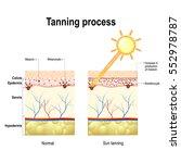 tanning process. when...   Shutterstock .eps vector #552978787