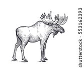Forest Animal Moose. Hand...