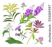 set of drawing wild flowers ... | Shutterstock . vector #553309597