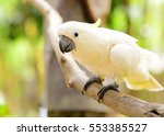 Cute Cockatoo On Branch