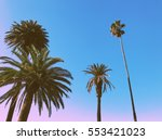 Palm Trees On The Beach In...