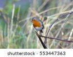 robin erithacus rubecula... | Shutterstock . vector #553447363
