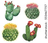 watercolor cactus set isolated... | Shutterstock . vector #553467757