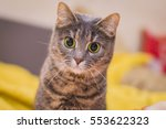 funny cat with playful eyes | Shutterstock . vector #553622323