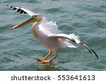 landing pelican in the walvis... | Shutterstock . vector #553641613