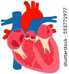 human heart muscle anatomy... | Shutterstock .eps vector #553772977
