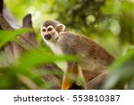 One Squirrel Monkey On Top Of ...