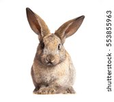 bunny cute rabbit on the white... | Shutterstock . vector #553855963