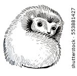 hedgehog | Shutterstock . vector #553881427