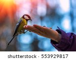wild bird titmouse on the palm  ... | Shutterstock . vector #553929817