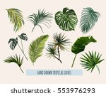 beautiful hand drawn  botanical ... | Shutterstock .eps vector #553976293