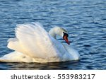white swan swiming on lake 4 | Shutterstock . vector #553983217