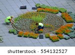 womans planting flowers in the...   Shutterstock . vector #554132527