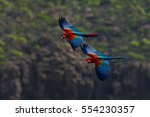 two big red and green macaws ... | Shutterstock . vector #554230357