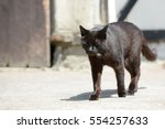 Stock photo black cat running in front of shed 554257633