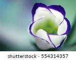 macro art abstract. flower in... | Shutterstock . vector #554314357