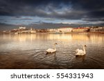 swan couple lovers on danube... | Shutterstock . vector #554331943