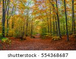 Footpath In A Forest In Autumn...