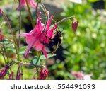 Bumble Bee Polinatin Pink...