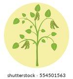 soybean plant soy flat design...