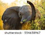 Elephants In Bwabwata National...