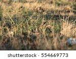 close up of green grass field... | Shutterstock . vector #554669773