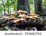 Flat Headed Mushrooms On The...