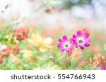 colorful cosmos | Shutterstock . vector #554766943