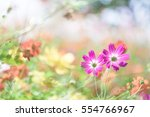 colorful cosmos | Shutterstock . vector #554766967