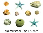 shell collage isolated on white | Shutterstock . vector #55477609