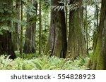 Macmillan Provincial Park Is A...