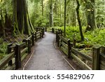 macmillan provincial park is a... | Shutterstock . vector #554829067