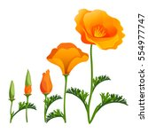 poppy ascending order or stages ... | Shutterstock .eps vector #554977747