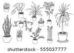 house plants illustration ... | Shutterstock .eps vector #555037777